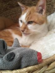 Meine Maus und ich