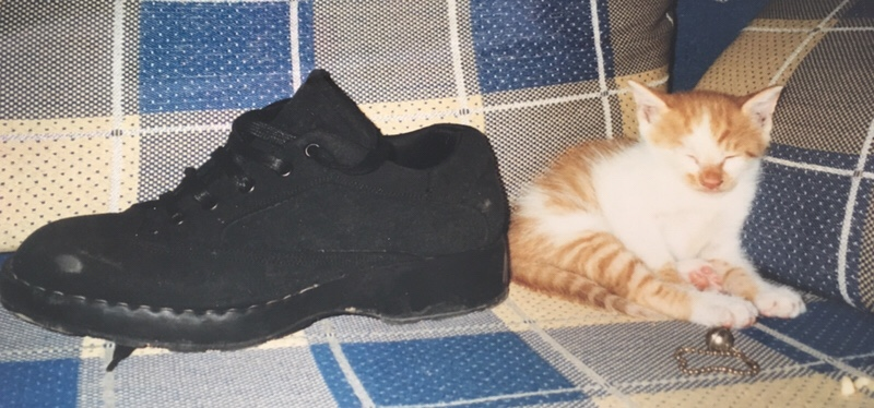 Schuhgröße 36