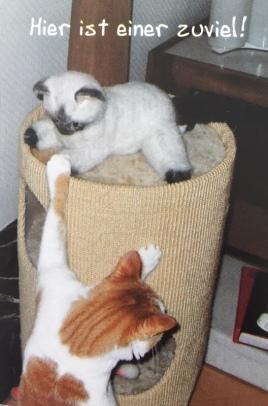 Weg hier! Mein Platz!