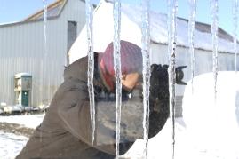 Hinter Gittern wird auch fotografiert