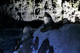Tolle Eisstalagmiten wachsen bis April