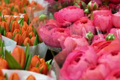 Tulpen & Ranunkeln